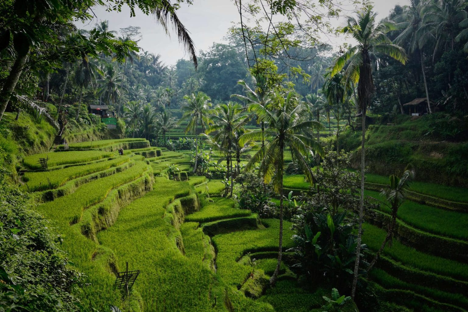 Ubud 3 day itinerary - rice fields
