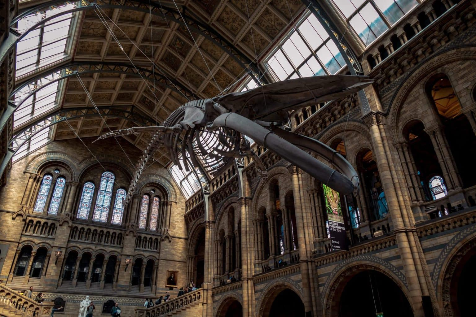 The dinosaur at Natural History Museum in London United Kingdom