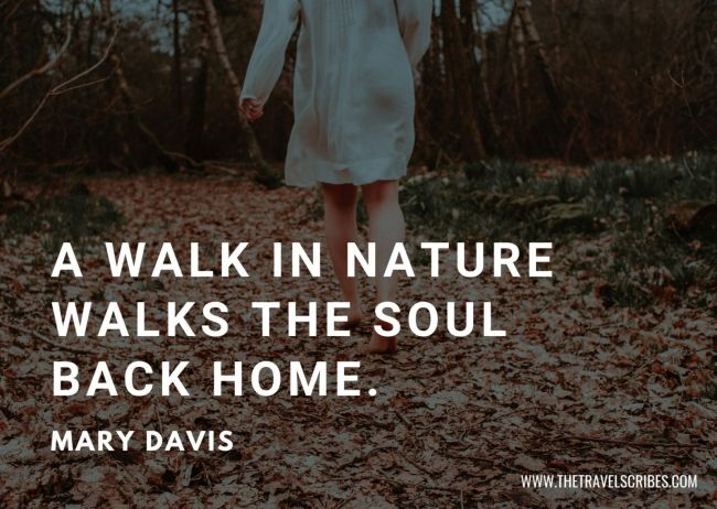 Nature hiking quote