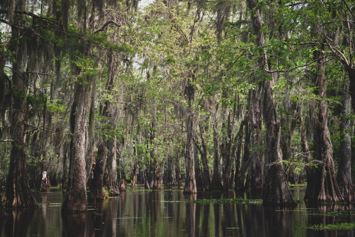 Books about wanderlust - Swamps USA