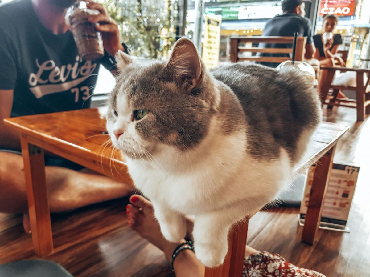 Cat 'n Cup Cafe - great thing to do in Chiang Rai